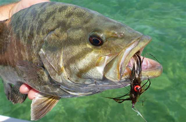 Mojo Bass Fly Rod: Lobs Large Bugs, Feeds Bass in their Faces