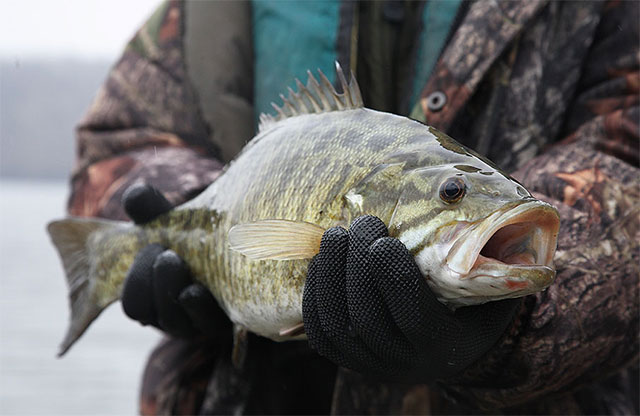 5 Tips for Catching Big Reservoir Smallmouth in Winter