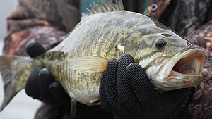 If a trophy-size smallmouth is on the bucket list, then look for the cold, adverse weather in the coming months to heat up the odds for success.