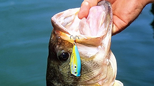 Chugger- and popper-type topwater lures have been around for years and can still load the boat with small to trophy-size bass.
