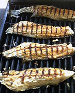 Grilled Puppy Drum