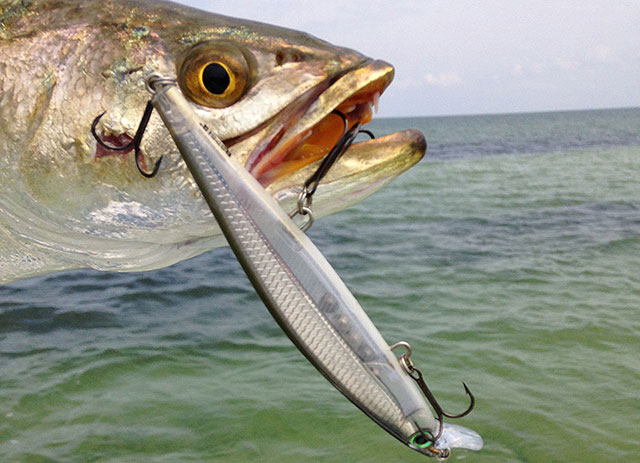 Sea Trout Fishing Tips