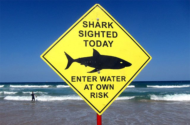 Increased Shark Attacks Predicted for 2016