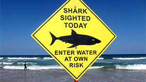 Some information suggests shark attacks will continue to increase and break the 2015 record.
