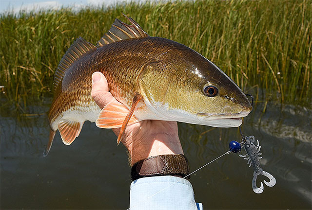 Swingheads, Wobbleheads and Hardheads Perfect for Shallow-Saltwater Fishing