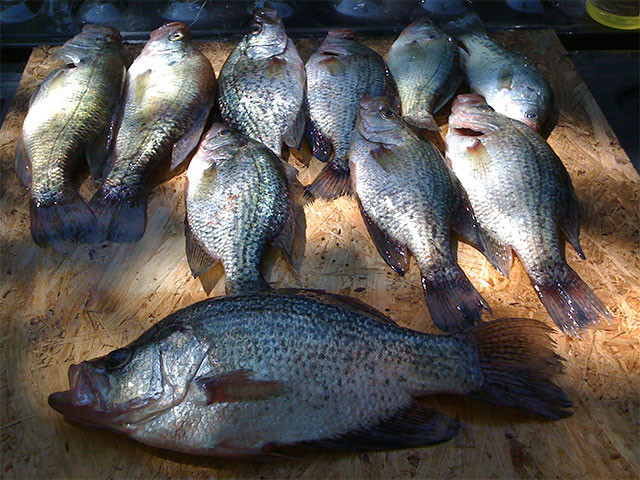 Easy and Tasty Baked Crappie