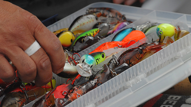 5 Best Baits for Early Fall Bass