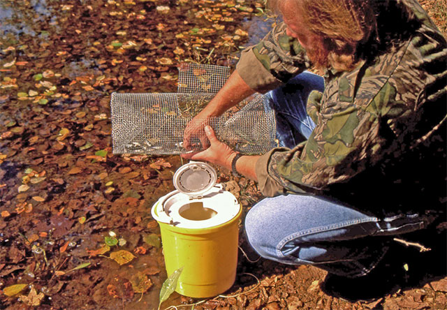 DIY: Building Your Own Minnow Traps