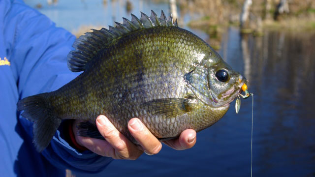 Power Tactics to Catch More Bream