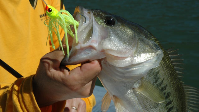 How To: Spinnerbaits for Bass in Stained Water