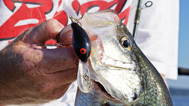 Expert Tips to Catch More Crappie