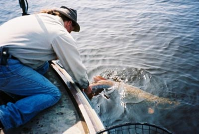 musky catch-and-release