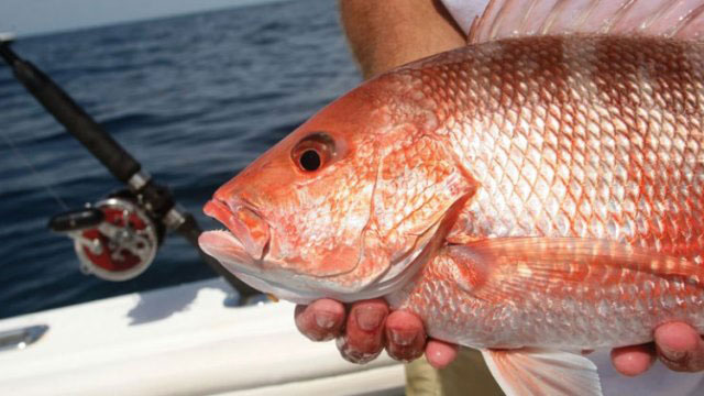 NOAA Unveils the National Saltwater Recreational Fishing Policy